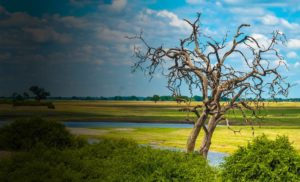 Tsowa Safari Island - Day Trip to Chobe