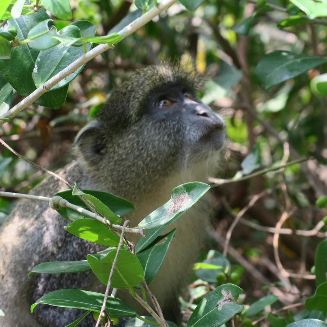 Thonga-Wildlife-circle